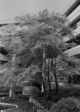Photo: Project 365 Day 282-Courtyard Tree  Today was a busy day at work. As I was heading out of the office I figured I better find something to take a photo of for my project 365. It was kind of a cool, gray day her in Atlanta so I was thinking about shooting something that would look good in black and white. That's how I came to photograph the tree in our office building courtyard. It looked better to my eye in B&W than color. Here's the result:  From the blog post at:http://www.marksphotographyspot.com/project-365-day-282-courtyard-tree-in-black-and-white/  #monochromemonday
