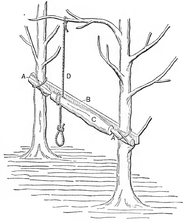 The Old Tree Lathe