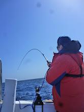 """Photo: ファーストヒットが11時30分!長かったー!・・・そして、1年3カ月ぶりの登場!""""カワサキさん""""どうですか?久しぶりの魚の引きは!"""