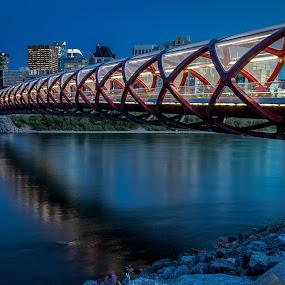 Calgary Peace Bridge by night by Rick Pelletier - City,  Street & Park  Skylines