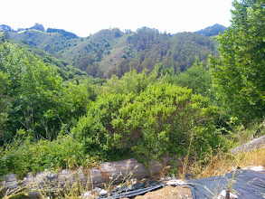 Photo: Looking out over the liberated woodland.