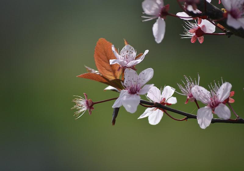 fuori c'è la primavera.... di gianfi51