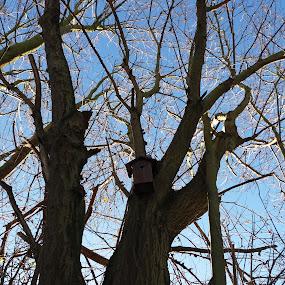 by Hilde Van Assche - Nature Up Close Trees & Bushes (  )