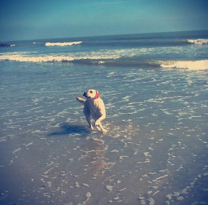 Porta un labrador al mare per vedere cos'è la libertà di fremorgan