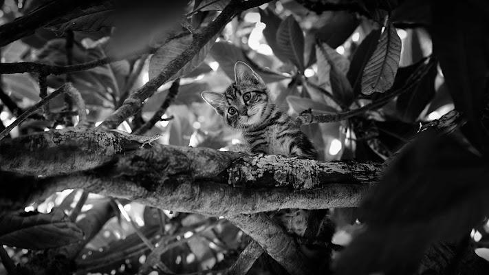 istinto predatore -caccia alla lucertola- di Daniela Ghezzi