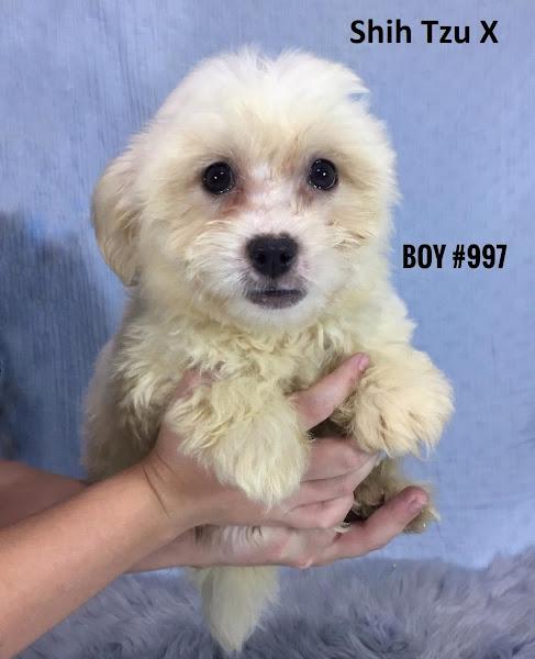 Puppy Palace Pet Shop   Puppies For Sale Brisbane