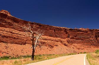Photo: La nature est implacable sous cette chaleur.
