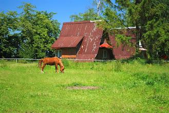 Photo: ponad 120 koni!