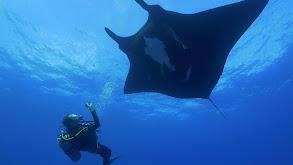 Giants of Palau thumbnail