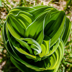 by Jeremy Elliott - Nature Up Close Other plants