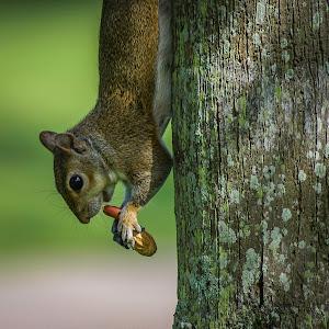 Squirrel4.jpg