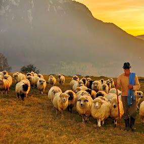 by Dan Baciu - People Professional People ( countryside, folk, fresh meet, transhumanta, folklore, romania, spring, shepherds camp, shepherd, nature, village, autumn, sunset, earth, sunrise, bran )