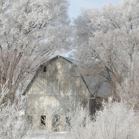 Ghost Barn by Pat Brink - Landscapes Weather