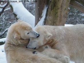 Photo: Rauferei im Schnee :-)