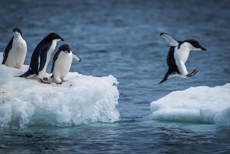 See Antarctica's Adelie penguins on a 12-hour trip by private jet from Cape Town