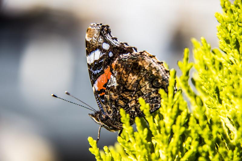 Mariposa di Ph. Flavio Catelani