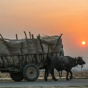 Rural transporter by Bishal Ranamagar - Transportation Other ( nepalgunj, bullcart, cart, sunrise, bull, nepal )