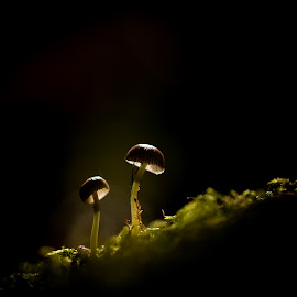 by Ingrid Holm Thorjussen - Nature Up Close Mushrooms & Fungi
