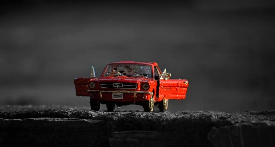 Mustang  by Ardijan Latifi - Transportation Automobiles