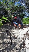Photo: Marine iguana