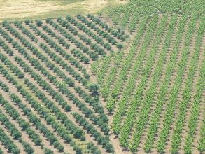 Photo: Mandalin-Şeftali Bahçeleri-Üzüm Asmaları  Keçi Kalesi - 16.05.2010