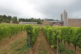 Photo: Abtei Sankt Hildegard - Vinstokkene er snart klar til høst