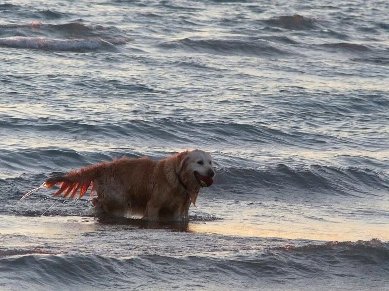 Giocare nell'acqua di alansa