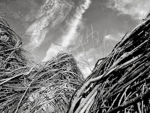 """Photo: Black and white photo of """"A Wiggle in Its Walk,"""" a woven wooden structure by Patrick Dougherty at Wegerzyn Gardens in Dayton, Ohio."""