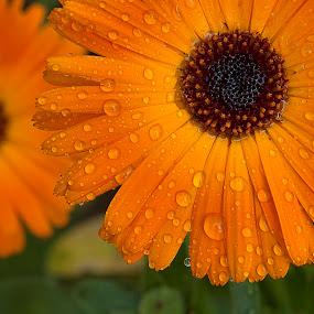 by Bharat Dudeja - Nature Up Close Flowers - 2011-2013