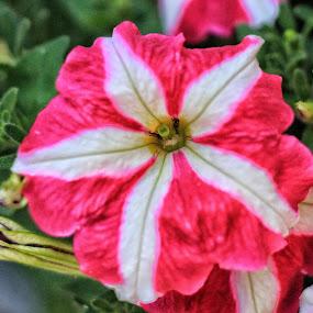 by Brian Egerton - Flowers Single Flower (  )