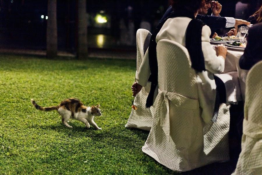 Wedding photographer Andrey Nastasenko (Flamingo). Photo of 17.12.2013