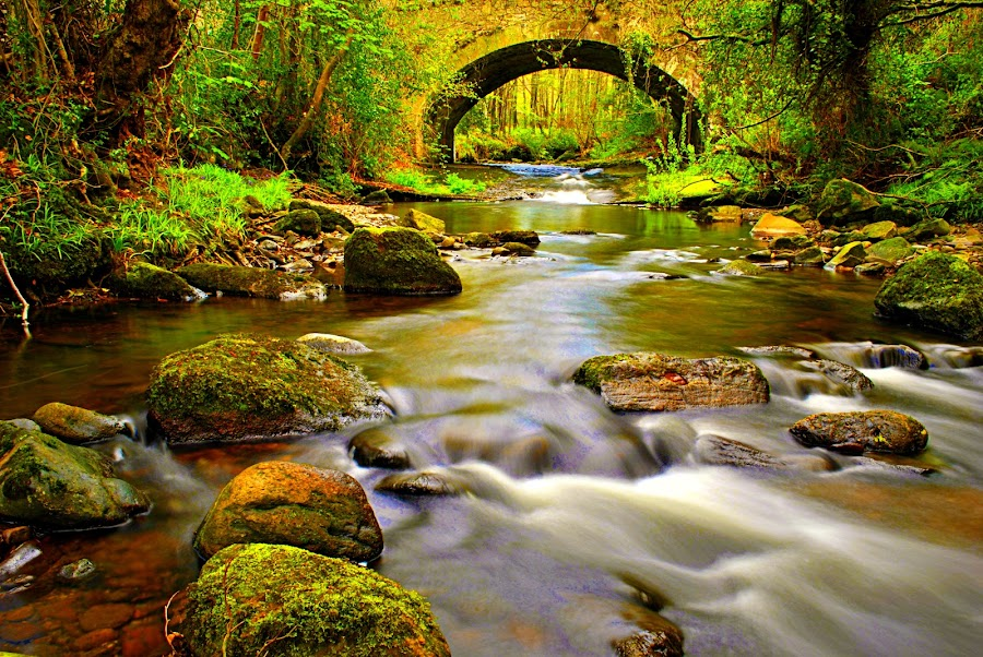 Rushing By by Joe Ormonde - Landscapes Waterscapes ( waterscape forest wood river bridge )