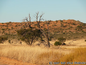 Photo: Kgalagadi transfrontier NP