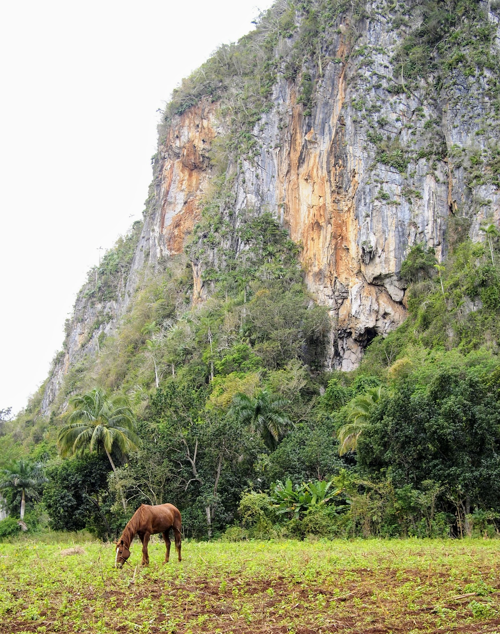 Exploring Viñales can be done on horses, on foot, or bikes (in dry season).
