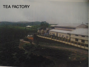 Photo: Tea Factory
