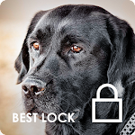 Dark Black Labrador Retriever Wallpapers AppLock