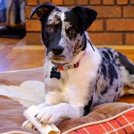 odie by Jeffrey Hansen - Animals - Dogs Puppies