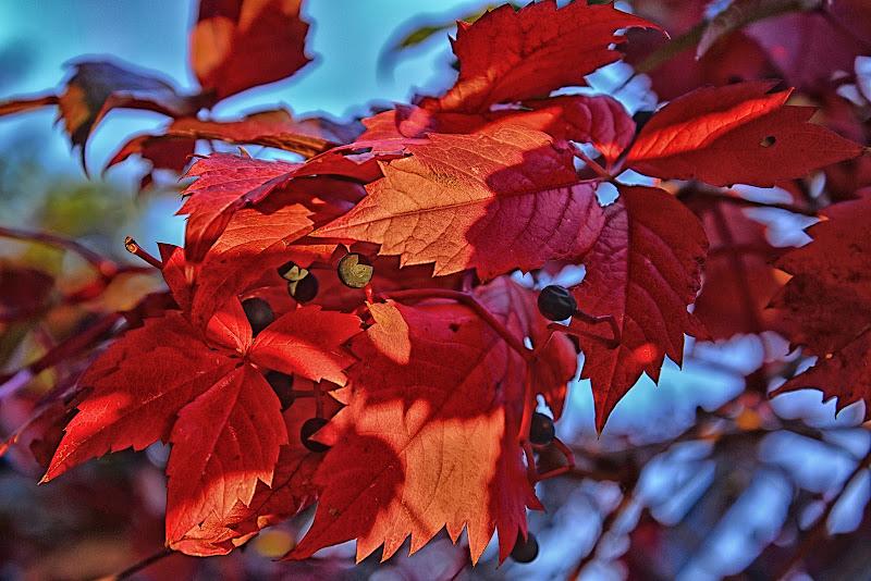 Passione d'autunno di mcris