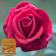 Download rose live wallpapers For PC Windows and Mac