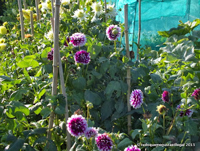 Photo: flores roxos