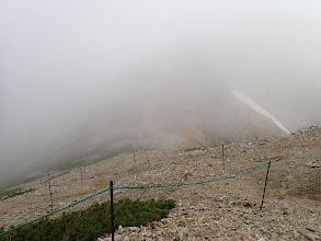 中岳との鞍部にコマクサ