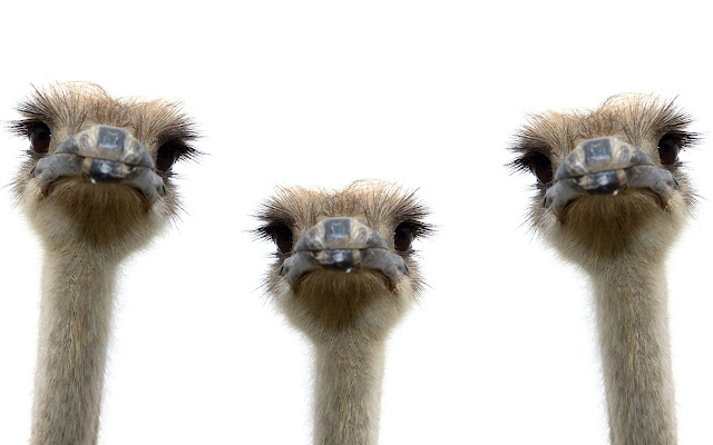 Ostrich - New Tab in HD