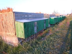 Photo: Experimental breeding tanks for white-headed ducks