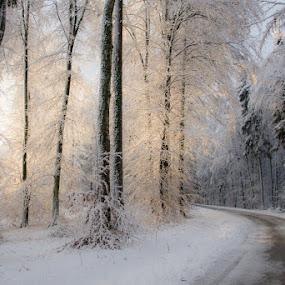 Gentle morning light by Joško Šimic - Landscapes Forests ( otočec, slovenia, golf, forest, struga,  )