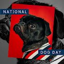 National Dog Day - Facebook Carousel Ad item
