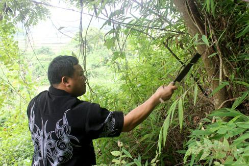 Một số cây thuốc ông lang Út phải tự đi lấy trong rừng