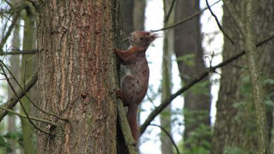 Photo: Wiewiórka w KPN