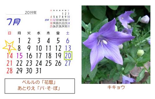7月の花暦