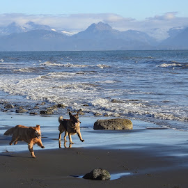 Great Day On The Beach by Patricia Phillips - Animals - Dogs Running ( alaska homer dogs running )