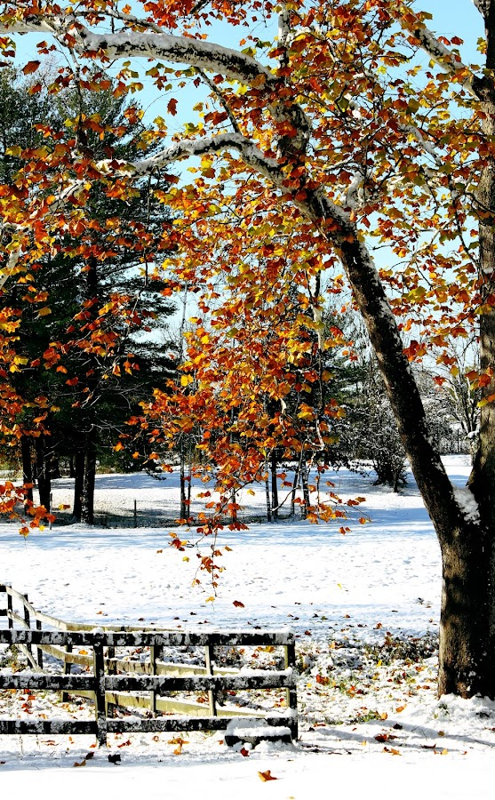 snow in october? by Becky Nesel - Landscapes Prairies, Meadows & Fields